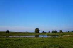 Polny staw, okolice wsi Wilczkowo