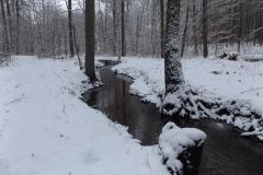 Potok Leśny k. jez. Kortowskiego, Olsztyn