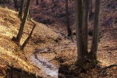 Potok w Kielarach