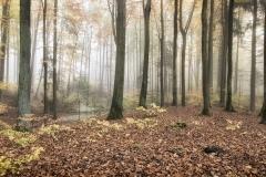 Rezerwat Łomy