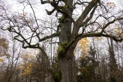 Rezerwat-przyrody-Deby-Napiwodzkie-1