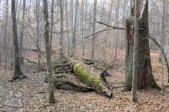 Rezerwat-przyrody-Deby-Napiwodzkie-2