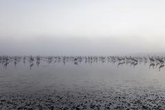 Rozlewiska Kwiecewo - żurawie - kier. północ