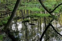 Rozlewisko w Źródłach Rzeki Łyny