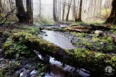 Rzeka Łyna przy źródłach