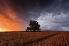 Samotne drzewo, Bartąg