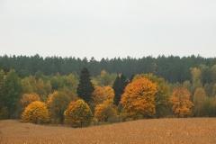 Stare opuszczone siedlisko, okolice Pawłowa, kier. pół. - zach.