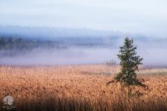 Trzcinowiska na brzegach Pasłęki