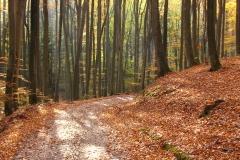 W rezerwacie Kamienna Góra, kierunek pd-zach