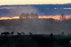 Wypas koni w zakolach Łyny, Knopin
