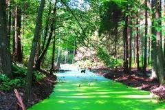 Zielona droga - Pasłęka