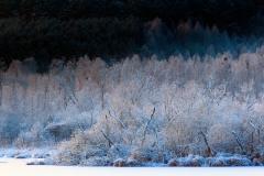 Zimowe pola