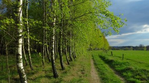 Orzechowo-droga-przy-lesie-53.978500-20.550210-kier.-pd